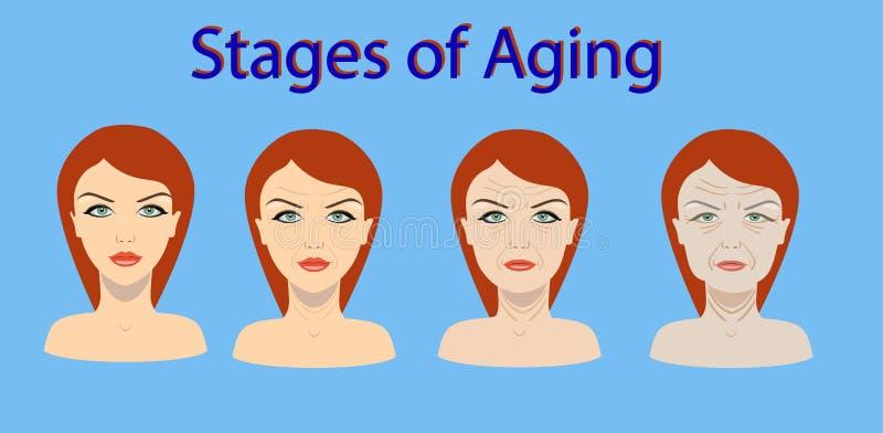 Διανυσματική διαδικασία γήρανσης Τέσσερα στάδια της αλλαγής προσώπου διανυσματική απεικόνιση