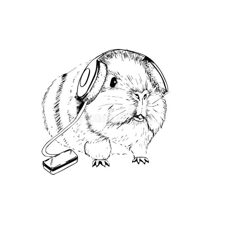 Διανυσματική εικόνα ενός αστείου ινδικού χοιριδίου με τα ακουστικά που ακούει τη μουσική διανυσματική απεικόνιση