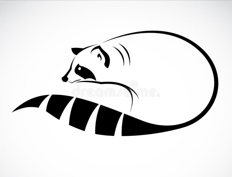 Διανυσματική εικόνα ενός ρακούν ελεύθερη απεικόνιση δικαιώματος