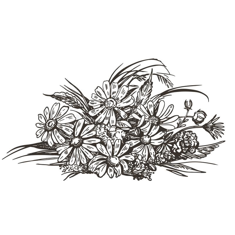 Διανυσματική εικόνα μιας ανθοδέσμης των άγριων λουλουδιών Εκλεκτής ποιότητας σκίτσο απεικόνιση αποθεμάτων