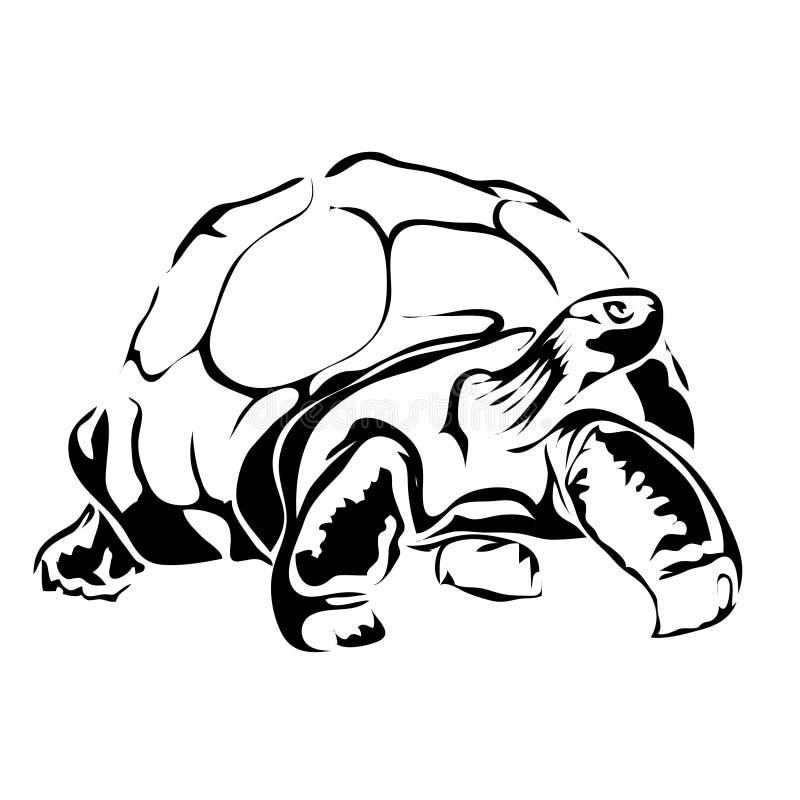 Διανυσματική εικόνα χελωνών περιλήψεων διανυσματική απεικόνιση