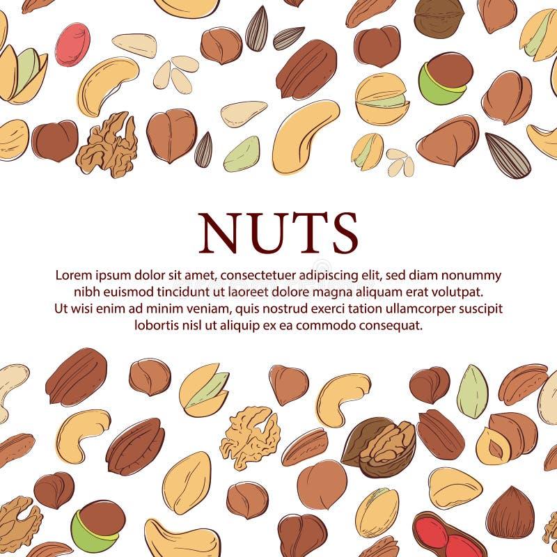 Διανυσματική εκλεκτής ποιότητας απεικόνιση καρυδιών Συρμένα χέρι αντικείμενα τροφίμων ελεύθερη απεικόνιση δικαιώματος