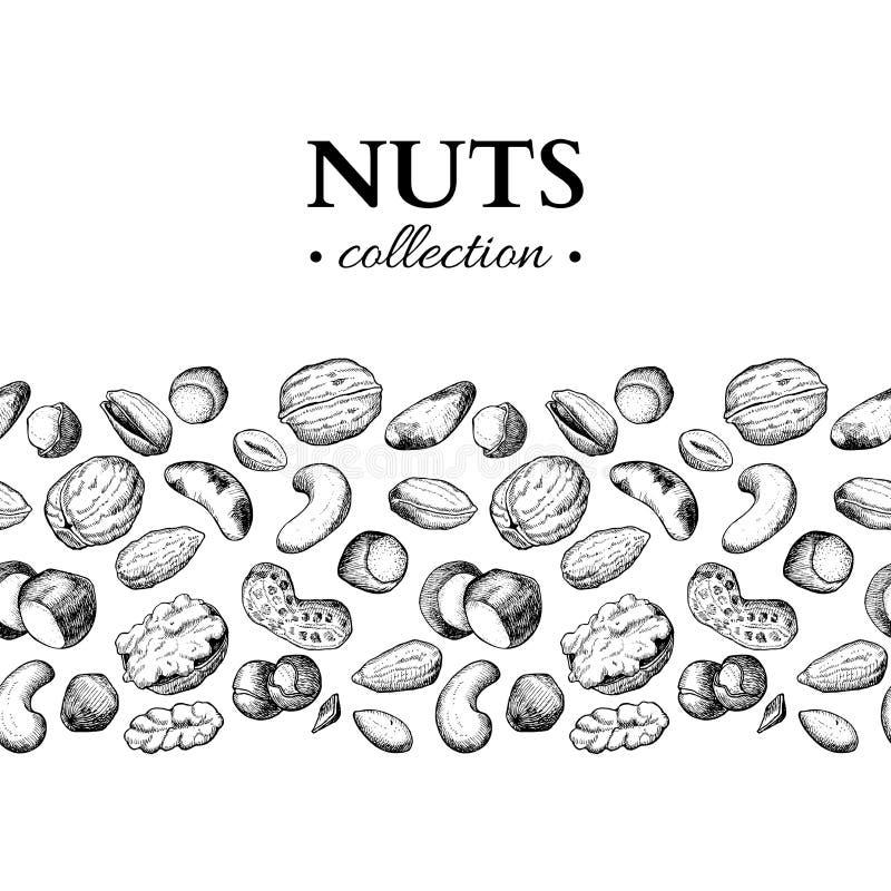 Διανυσματική εκλεκτής ποιότητας απεικόνιση καρυδιών Συρμένα χέρι χαραγμένα αντικείμενα τροφίμων διανυσματική απεικόνιση