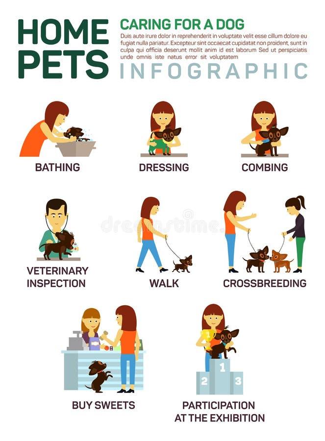 Διανυσματική επίπεδη απεικόνιση infographic της φροντίδας για το σκυλί κατοικίδιων ζώων Λούσιμο, πλύσιμο, επίδεσμος, κτένισμα, κτ ελεύθερη απεικόνιση δικαιώματος