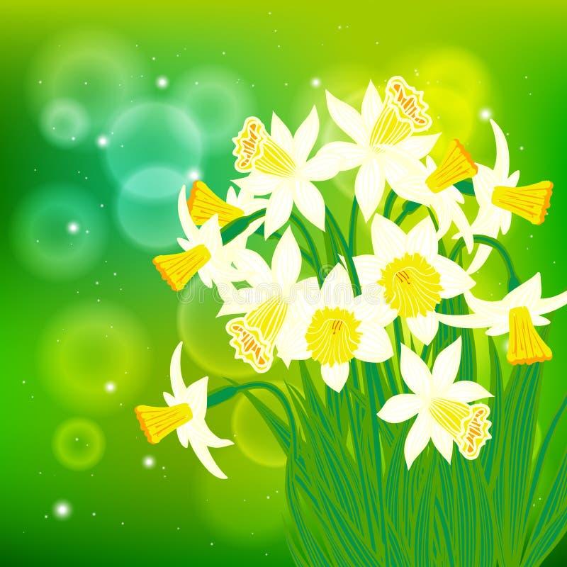Διανυσματική κάρτα με τα άσπρα daffodils στο φως bokeh απεικόνιση αποθεμάτων