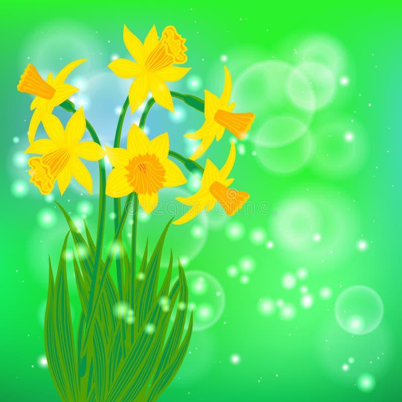 Διανυσματική κάρτα με τα daffodils στο ανοικτό πράσινο bokeh διανυσματική απεικόνιση