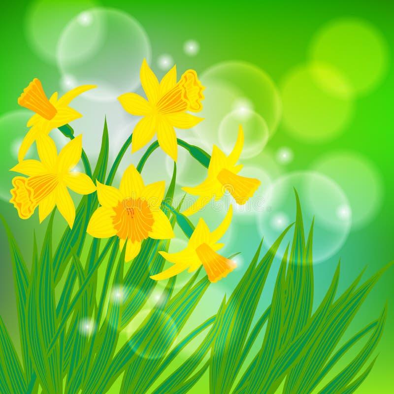 Διανυσματική κάρτα με τα daffodils στο ανοικτό πράσινο bokeh ελεύθερη απεικόνιση δικαιώματος