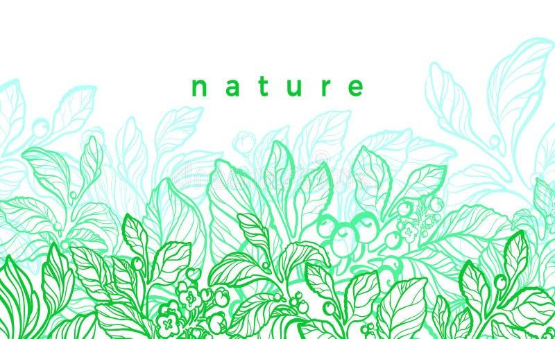 Διανυσματική κάρτα φύσης Γραφική απεικόνιση, βοτανικές εγκαταστάσεις Πράσινος κλάδος συντρόφων ελεύθερη απεικόνιση δικαιώματος