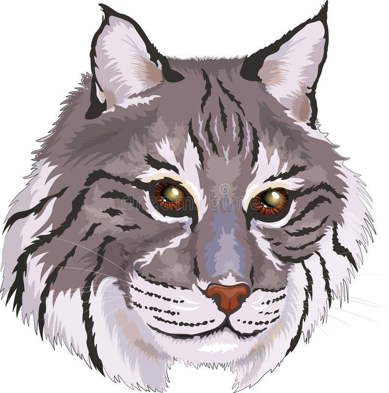Διανυσματική μεγάλη γάτα bobcat απεικόνισης γκρίζα στο ύφος κινούμενων σχεδίων απεικόνιση αποθεμάτων