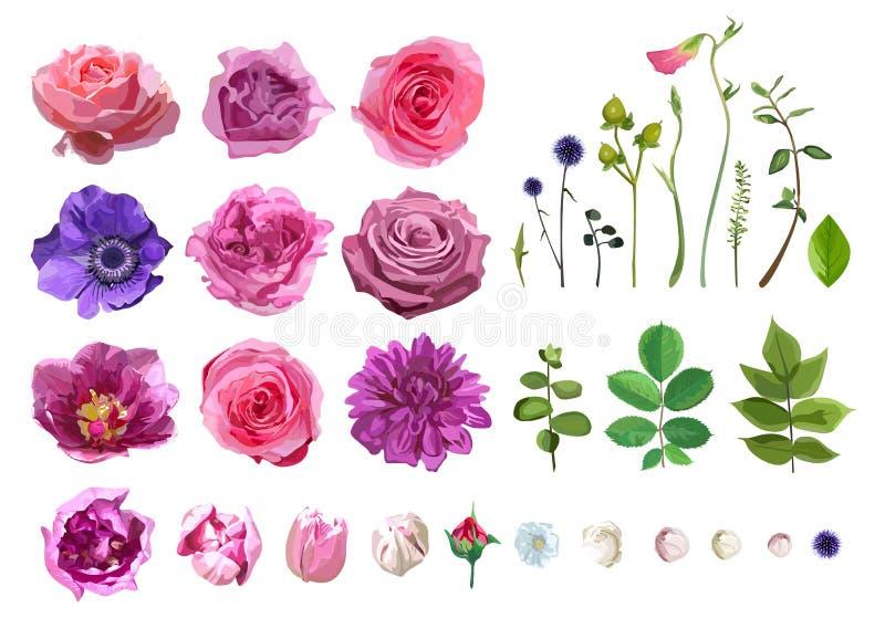 Διανυσματική μεγάλη επιλογή των διάφορων φύλλων λουλουδιών συμπεριλαμβανομένου ροδαλού, Δ απεικόνιση αποθεμάτων