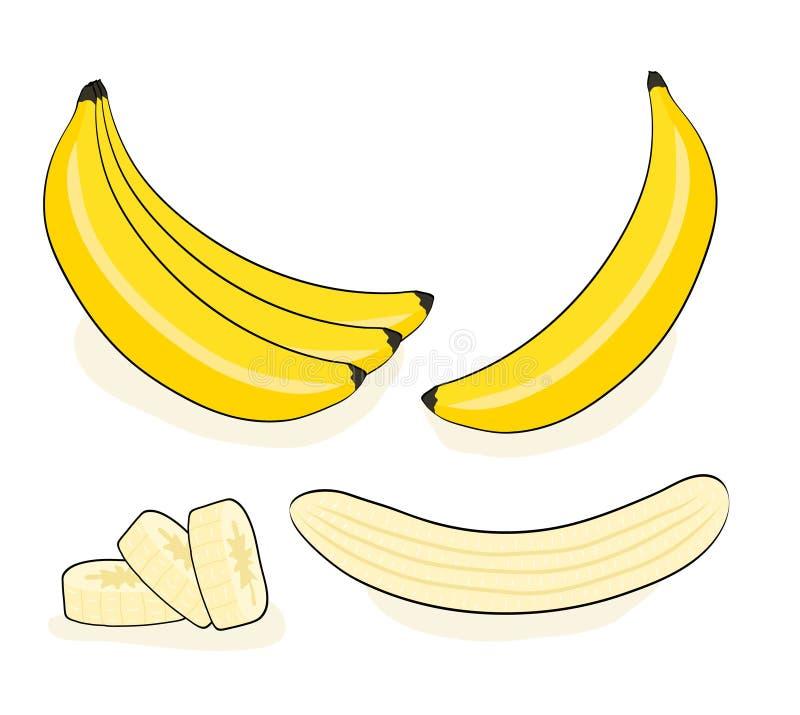 Διανυσματική μπανάνα Δέσμες των φρέσκων φρούτων μπανανών που απομονώνονται στο λευκό ελεύθερη απεικόνιση δικαιώματος