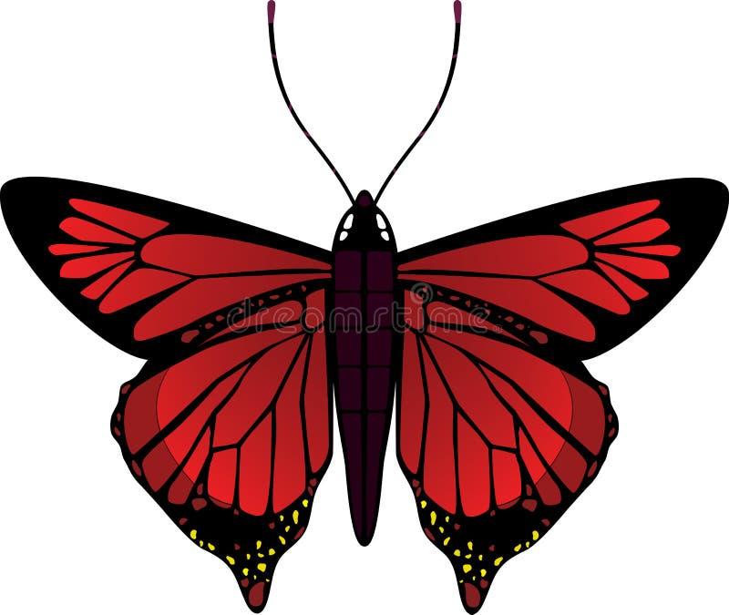 Διανυσματική πεταλούδα στοκ φωτογραφίες με δικαίωμα ελεύθερης χρήσης