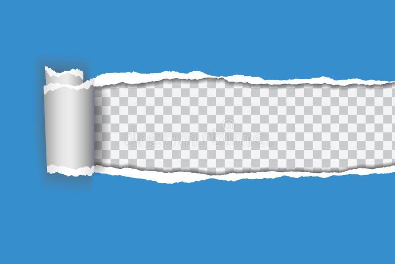 Διανυσματική ρεαλιστική απεικόνιση του μπλε σχισμένου εγγράφου με κυλημένος edg απεικόνιση αποθεμάτων
