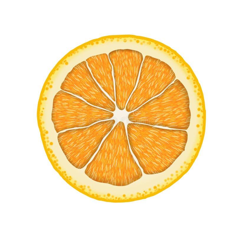 Διανυσματική ρεαλιστική πορτοκαλιά φέτα Απεικόνιση των εσπεριδοειδών απεικόνιση αποθεμάτων