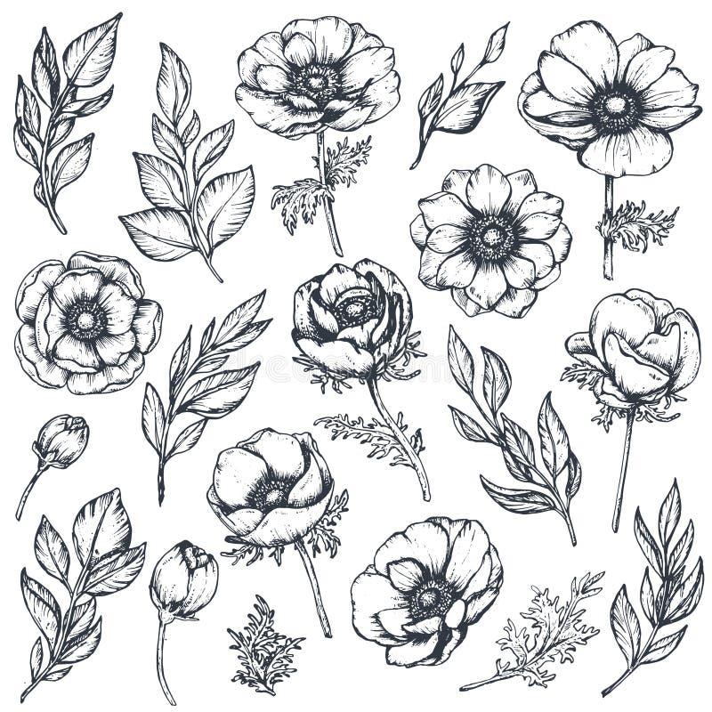 Διανυσματική συλλογή συρμένων των χέρι λουλουδιών anemone ελεύθερη απεικόνιση δικαιώματος