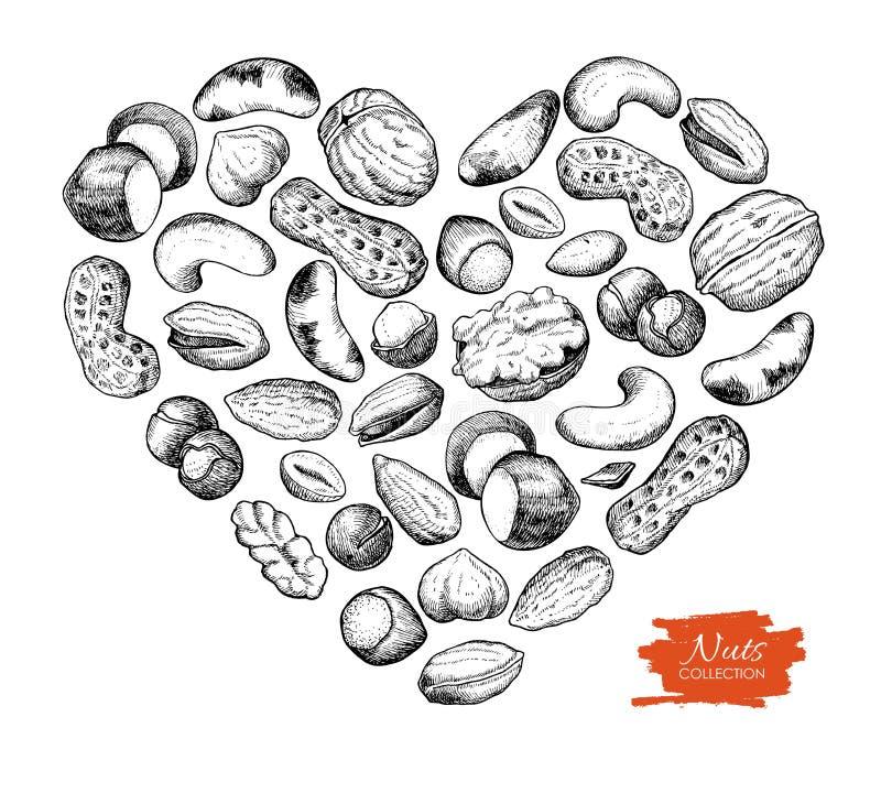 Διανυσματική συρμένη χέρι απεικόνιση καρυδιών στη μορφή καρδιών ελεύθερη απεικόνιση δικαιώματος