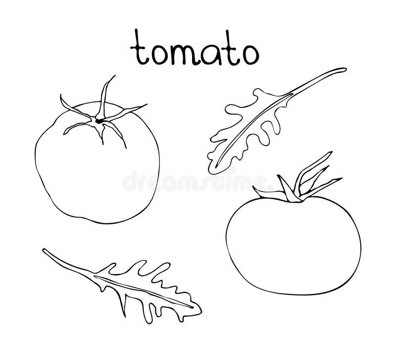 Διανυσματική συρμένη χέρι απεικόνιση με την ντομάτα και το rucola doodle Μαύρη γραμμική τέχνη των χορτοφάγων τροφίμων ελεύθερη απεικόνιση δικαιώματος