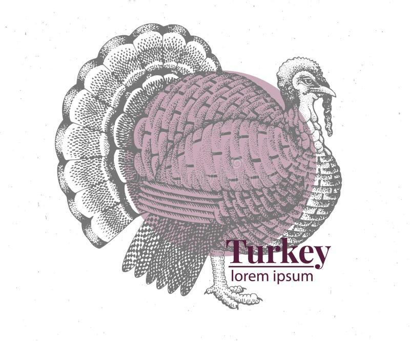Διανυσματική συρμένη χέρι απεικόνιση της Τουρκίας Αναδρομικό ύφος χάραξης Σχέδιο ζώων αγροκτημάτων σκίτσων Πρότυπο λογότυπων απεικόνιση αποθεμάτων