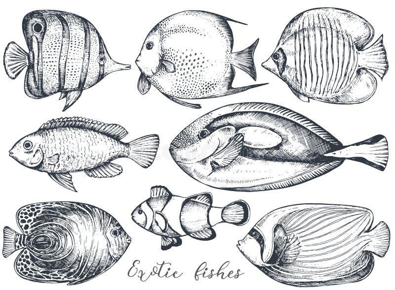 Διανυσματική συλλογή συρμένων των χέρι εξωτικών ψαριών απεικόνιση αποθεμάτων