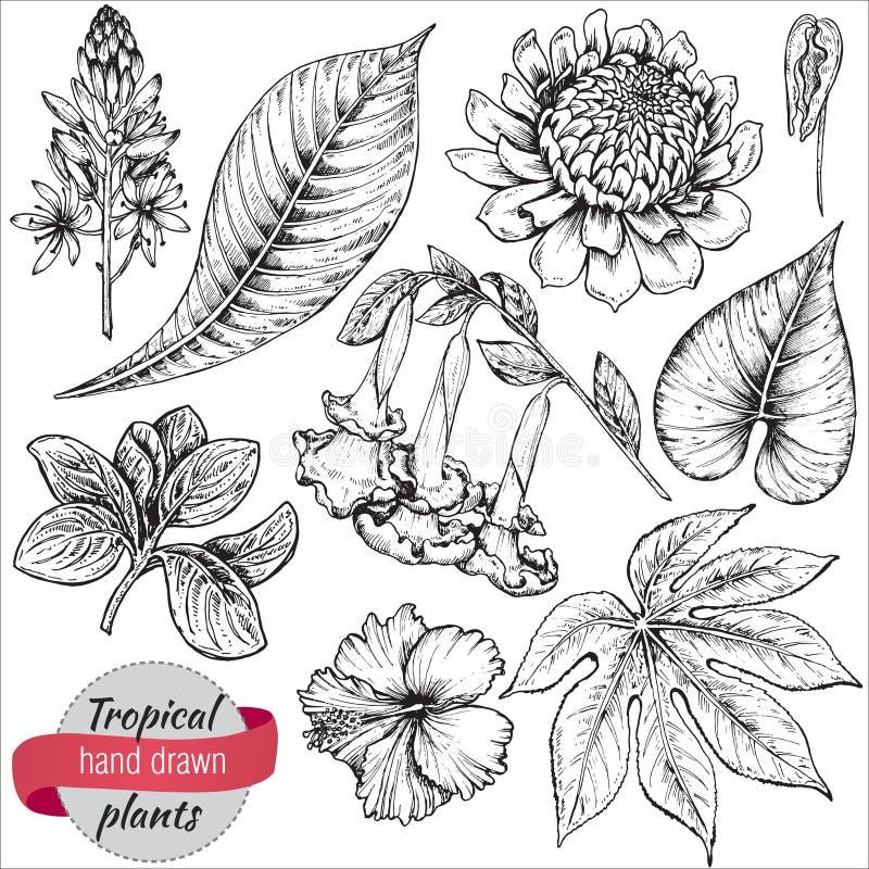 Διανυσματική συλλογή συρμένων των χέρι τροπικών λουλουδιών και των φύλλων ελεύθερη απεικόνιση δικαιώματος