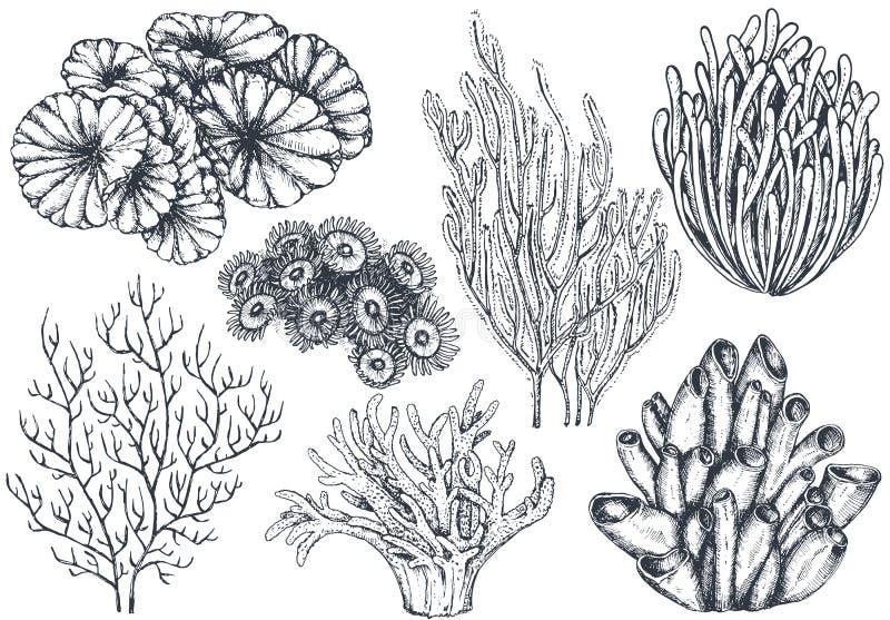 Διανυσματική συλλογή συρμένων των χέρι ωκεάνιων εγκαταστάσεων και των στοιχείων κοραλλιογενών υφάλων διανυσματική απεικόνιση