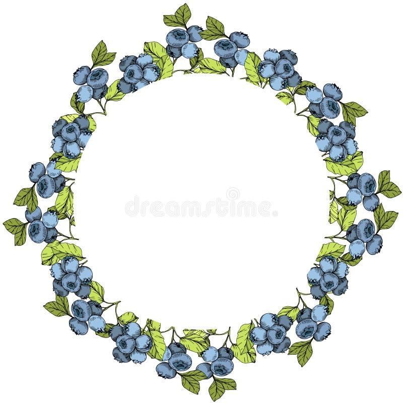 Διανυσματική τέχνη μελανιού βακκινίων μπλε και πράσινη χαραγμένη Μούρα και πράσινα φύλλα Τετράγωνο διακοσμήσεων συνόρων πλαισίων ελεύθερη απεικόνιση δικαιώματος