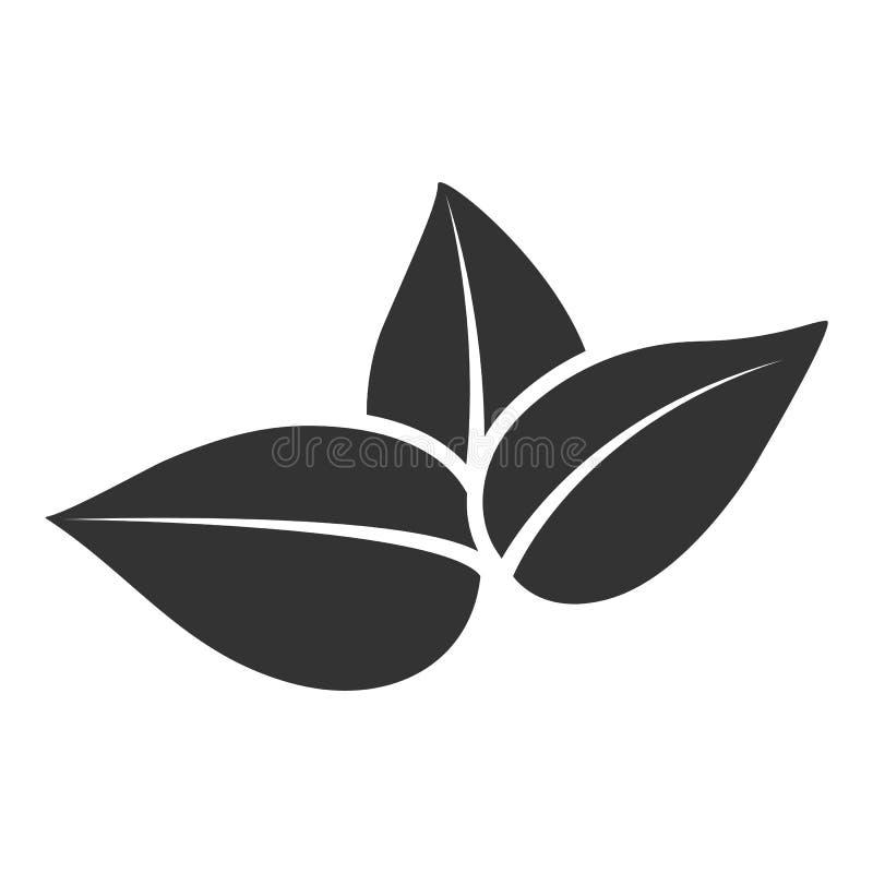 Διανυσματική τυποποιημένη σκιαγραφία του φύλλου άνοιξη δέντρων τσαγιού που απομονώνεται στο άσπρο υπόβαθρο Σημάδι Eco, ετικέτα τη απεικόνιση αποθεμάτων