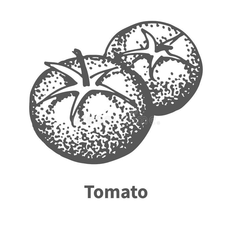 Διανυσματική hand-drawn ντομάτα απεικόνισης ελεύθερη απεικόνιση δικαιώματος