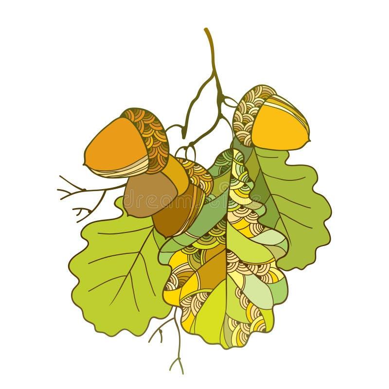 Διανυσματικός κλάδος με περίκομψα δρύινα πράσινα φύλλα και πέντε βελανίδια που απομονώνονται στο άσπρο υπόβαθρο απεικόνιση αποθεμάτων