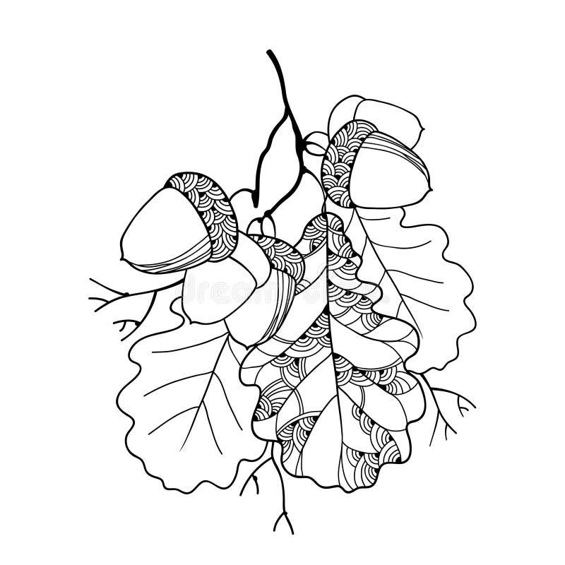 Διανυσματικός κλάδος περίκομψα δρύινα φύλλα και πέντε βελανίδια που απομονώνονται με στο λευκό ελεύθερη απεικόνιση δικαιώματος