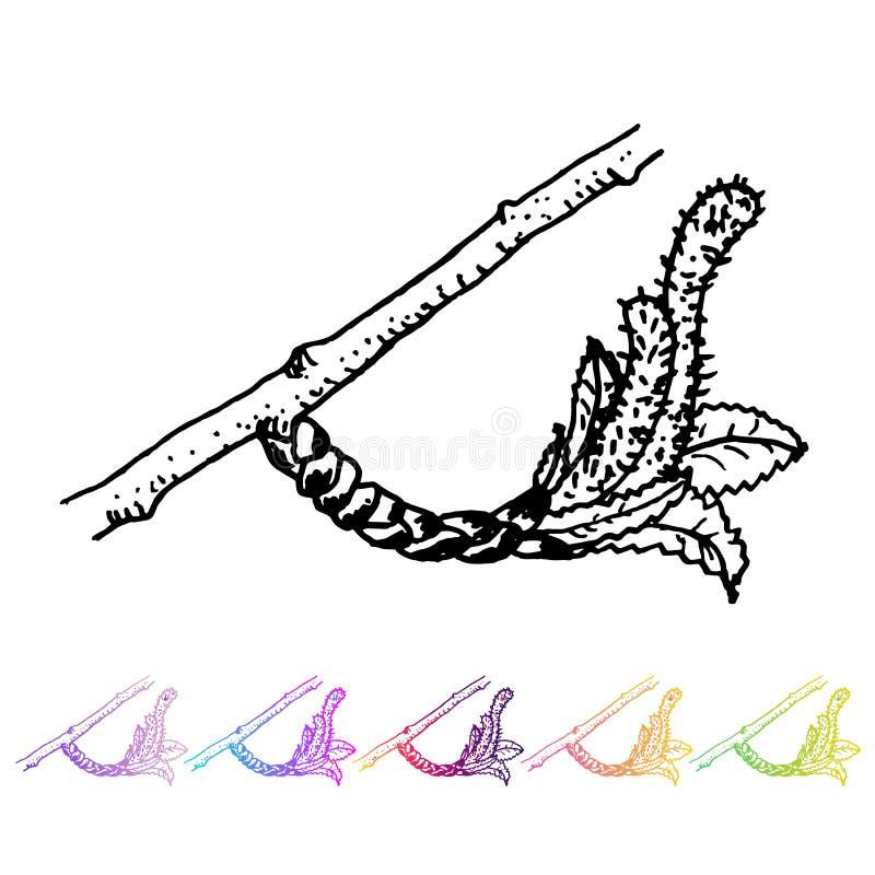 Διανυσματικός οφθαλμός νεφρών με το μαύρο σχέδιο φύλλων στο σχέδιο φυτών Χρωματισμένη χέρι χλωρίδα κήπων άνοιξη Sletch που απομον απεικόνιση αποθεμάτων