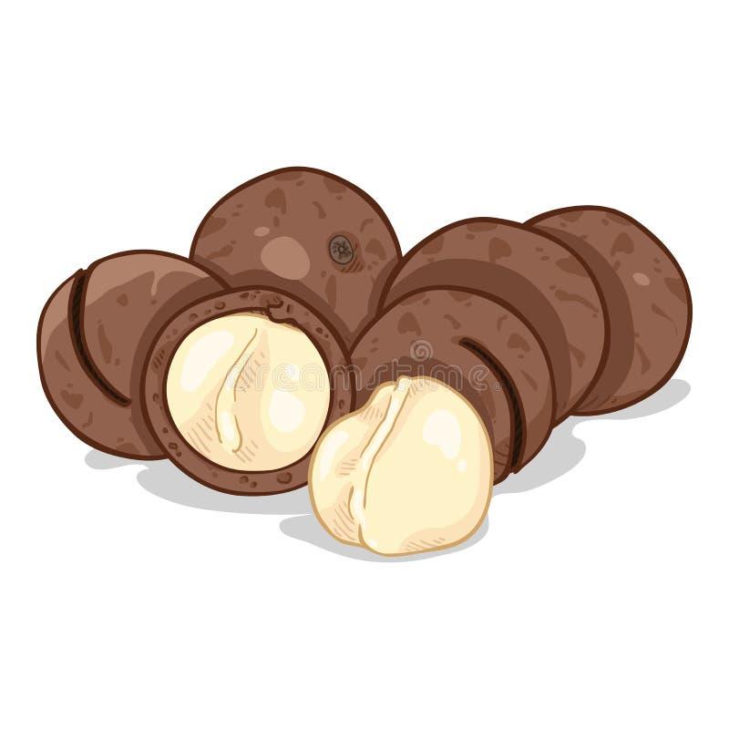 Διανυσματικός σωρός κινούμενων σχεδίων Macadamia των καρυδιών διανυσματική απεικόνιση