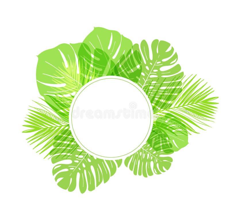Διανυσματικός φοίνικας φύλλων θερινών πράσινων καρτών υποβάθρου διανυσματική απεικόνιση
