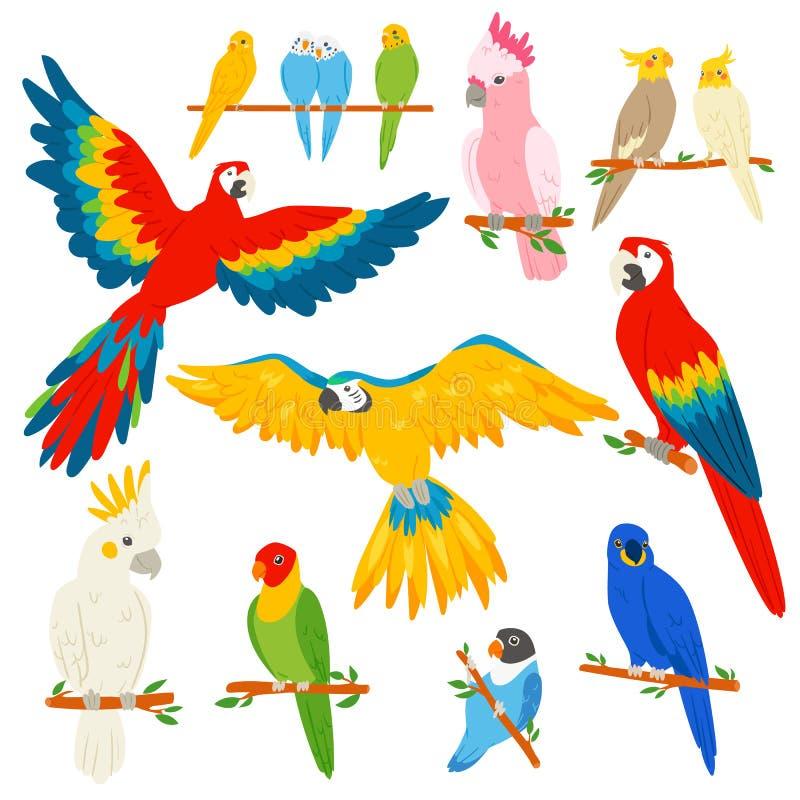 Διανυσματικός parrotry χαρακτήρας παπαγάλων και τροπικό εξωτικό macaw πουλιών ή κινούμενων σχεδίων στο σύνολο απεικόνισης τροπικώ απεικόνιση αποθεμάτων