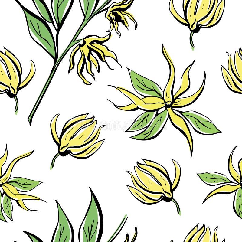 Διανυσματικό άνευ ραφής σχέδιο με το ylang απεικόνιση αποθεμάτων