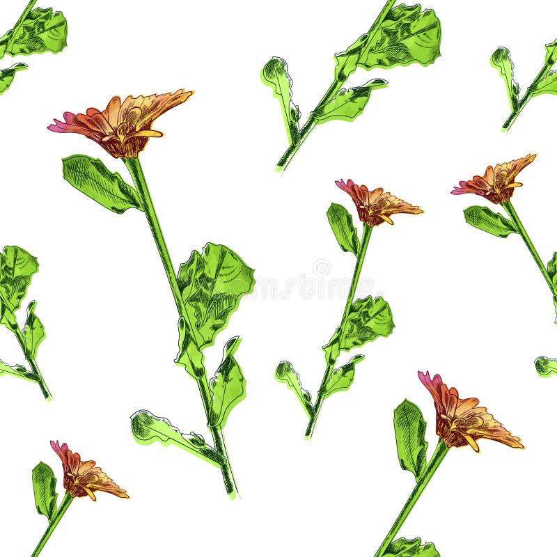 Διανυσματικό άνευ ραφής σχέδιο, Floral υπόβαθρο, λουλούδι με τα σχέδια φύλλων, χρωματισμένη Watercolor απεικόνιση διανυσματική απεικόνιση