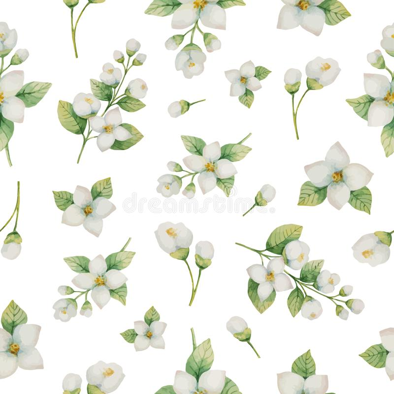 Διανυσματικό άνευ ραφής σχέδιο Watercolor των λουλουδιών και των κλάδων Jasmine σε ένα άσπρο υπόβαθρο διανυσματική απεικόνιση