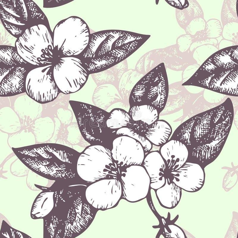 Διανυσματικό άνευ ραφής σχέδιο με jasmine τα λουλούδια απεικόνιση αποθεμάτων