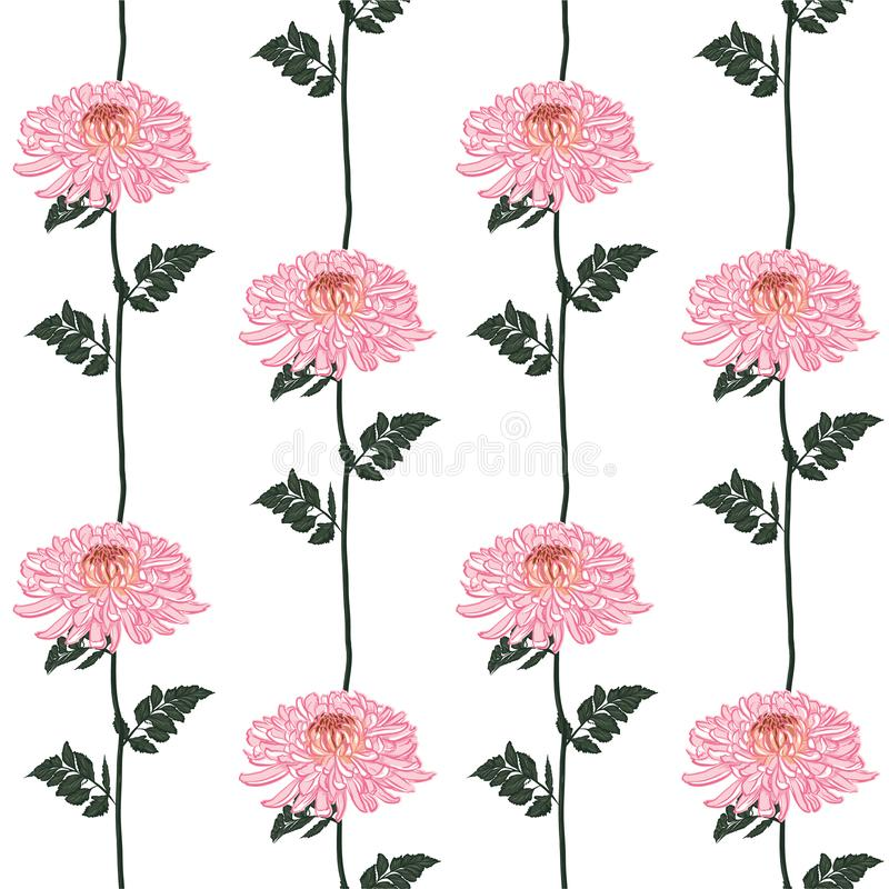 Διανυσματικό άνευ ραφής floral σχέδιο Ανθίζοντας ρόδινα ιαπωνικά ρόδινα λουλούδια χρυσάνθεμων Απεικόνιση στο κάθετο σχέδιο γραμμώ ελεύθερη απεικόνιση δικαιώματος