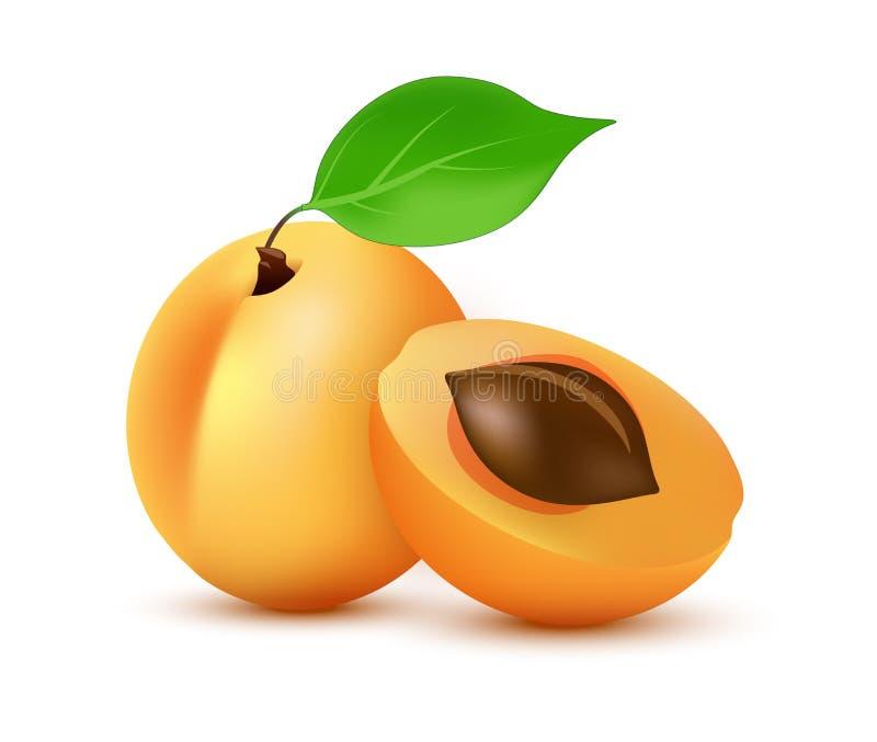 Διανυσματικό εικονίδιο βερίκοκων στο ρεαλιστικό ύφος - απεικόνιση εικονιδίων των πορτοκαλιών θερινών juicy φρούτων με το φύλλο πο ελεύθερη απεικόνιση δικαιώματος