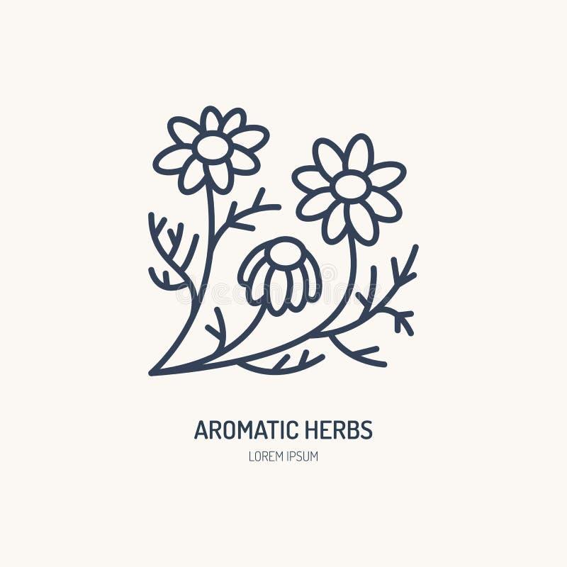 Διανυσματικό εικονίδιο γραμμών Chamomile Αρωματικό λογότυπο χορταριών, σημάδι αλυσίδων μαργαριτών Γραμμική απεικόνιση για το φυσι διανυσματική απεικόνιση