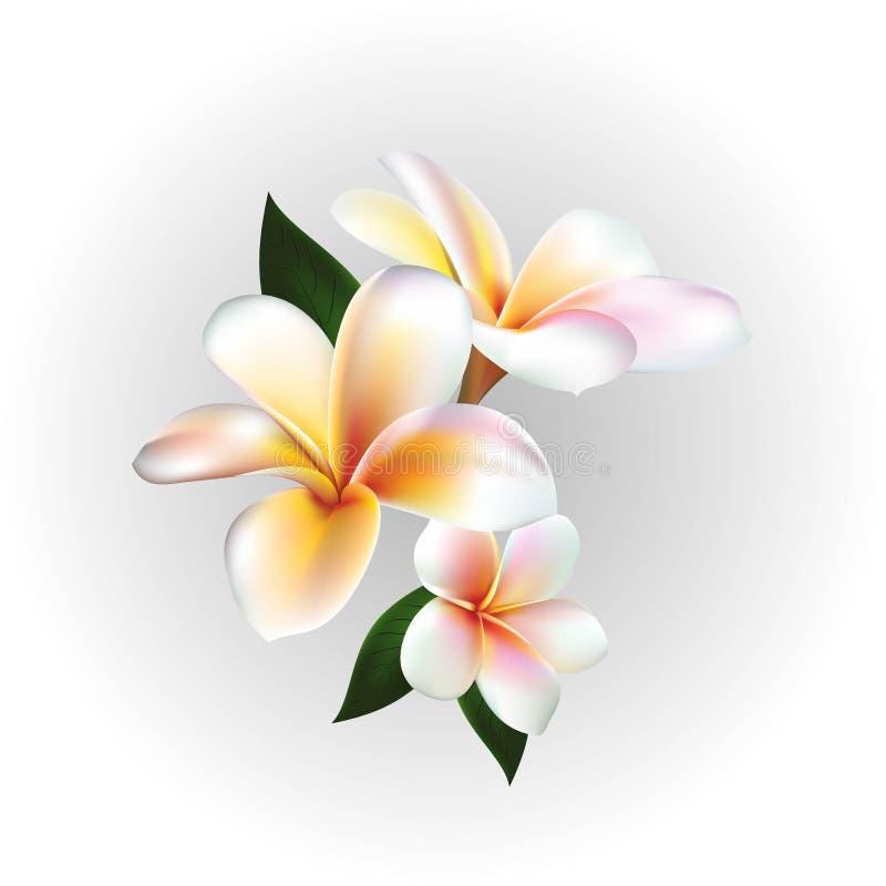 Διανυσματικό επιπλέον λουλούδι διανυσματική απεικόνιση