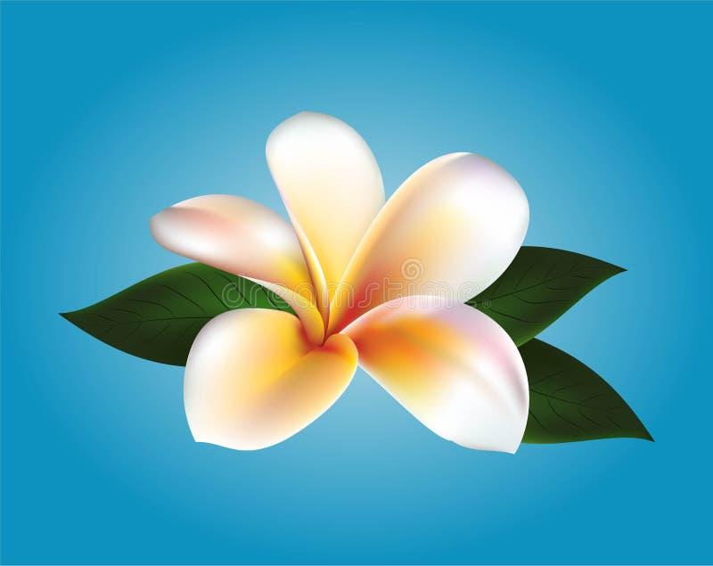 Διανυσματικό επιπλέον λουλούδι ελεύθερη απεικόνιση δικαιώματος
