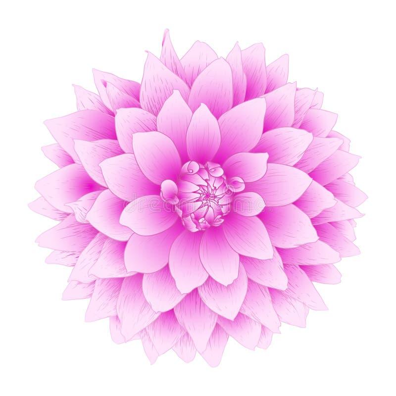 Διανυσματικό λουλούδι νταλιών. απεικόνιση αποθεμάτων