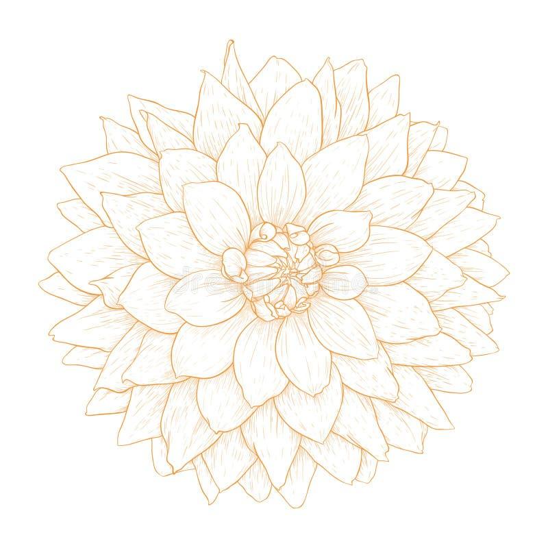 Διανυσματικό λουλούδι νταλιών. διανυσματική απεικόνιση