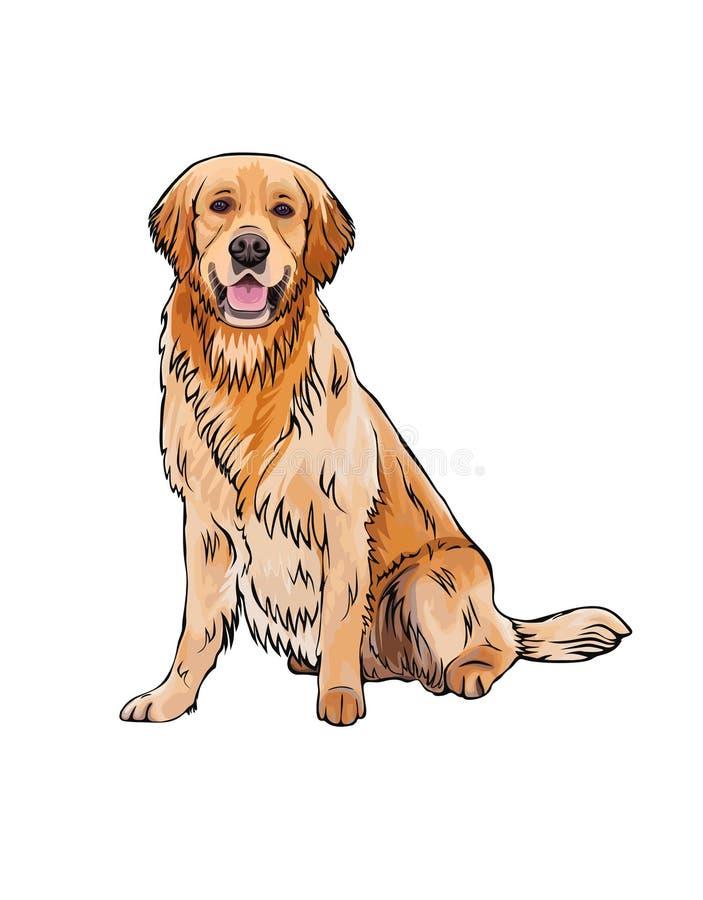 Διανυσματικό πορτρέτο συνόλων χρυσό Retriever φυλής σκυλιών ελεύθερη απεικόνιση δικαιώματος