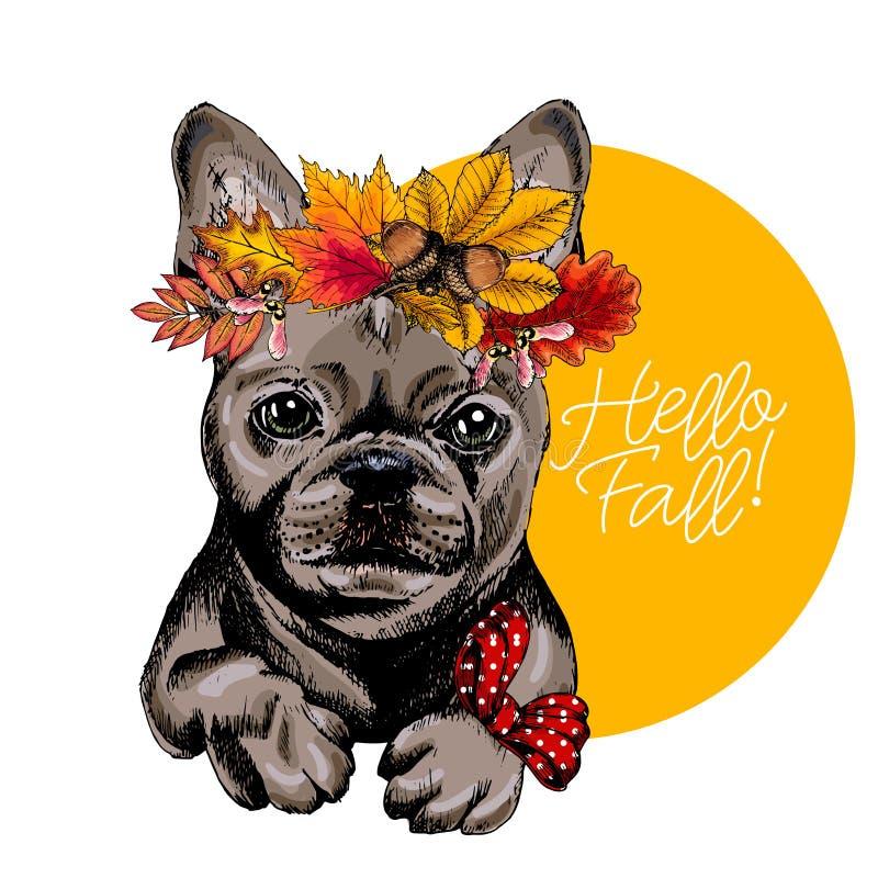 Διανυσματικό πορτρέτο του γαλλικού σκυλιού μπουλντόγκ που φορά την κορώνα φύλλων φθινοπώρου Γειά σου πέστε απεικόνιση Η βαλανιδιά ελεύθερη απεικόνιση δικαιώματος