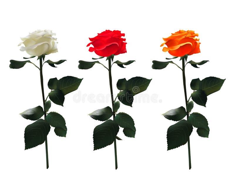 Διανυσματικό ρεαλιστικό σύνολο τριαντάφυλλων: Άσπρος, κόκκινος, πορτοκάλι Στην άσπρη ανασκόπηση διανυσματική απεικόνιση