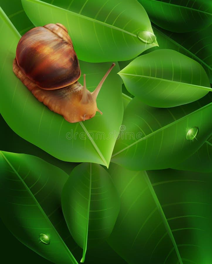 Διανυσματικό σαλιγκάρι που σέρνεται στο πράσινο φύλλο απεικόνιση αποθεμάτων