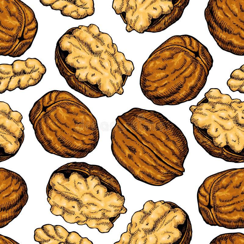 Διανυσματικό συρμένο χέρι άνευ ραφής σχέδιο καρυδιών ξύλων καρυδιάς Καλλιτεχνικά ζωηρόχρωμα αντικείμενα τροφίμων σκίτσων απεικόνιση αποθεμάτων